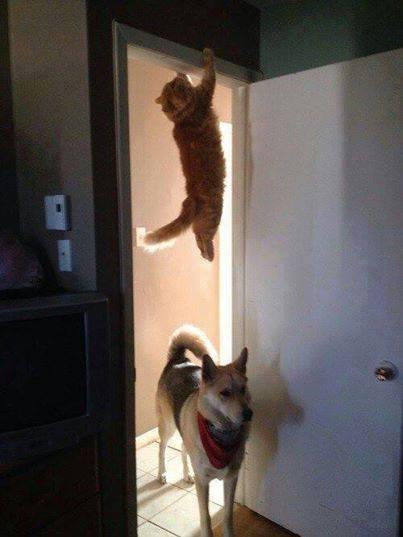 Πού πήγε η γάτα;